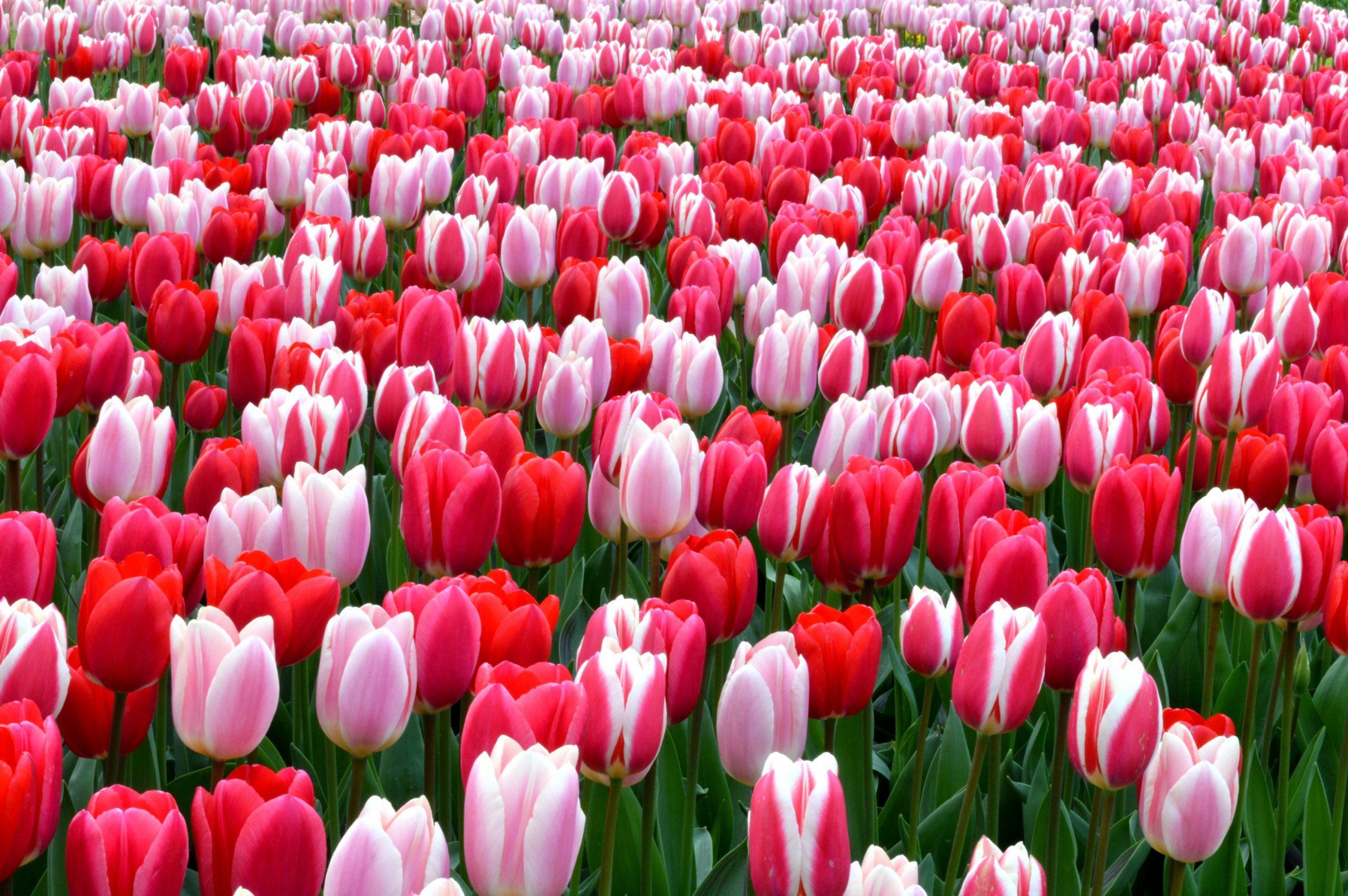 Tiệm hoa tươi Tân Biên